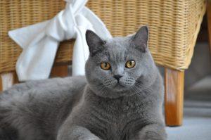 Henry mit seinen Bernstein farbenen Augen